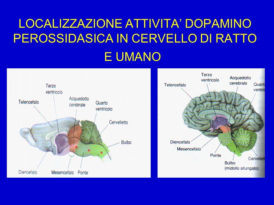 Studio in vitro della formazione del dopaminocromo La formazione di dopaminocromo è catalizzata in maniera simile da perossidasi purificate (lattoperossidasi, mieloperossidasi, perossidasi di rafano) e da una frazione di cervello di ratto, in presenza di perossido didrogeno.