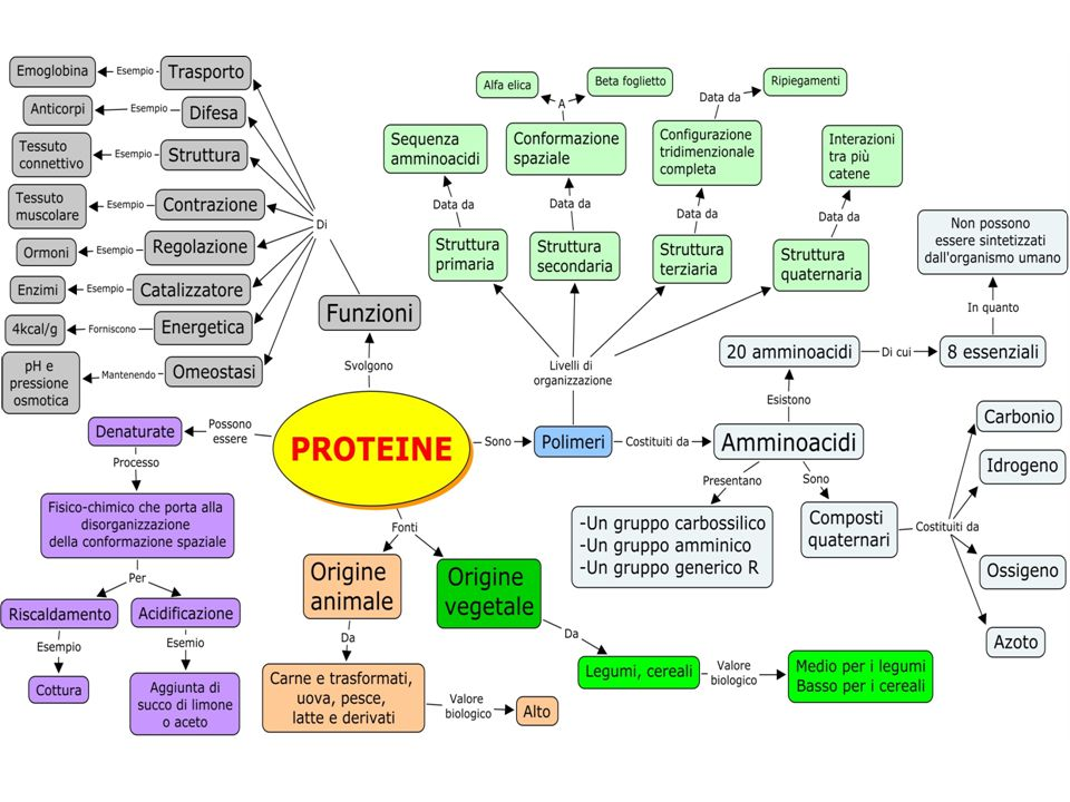 Le proteine sono macromolecole organiche polimeriche costituite da catene di amminoacidi Presentano: Un gruppo amminico.