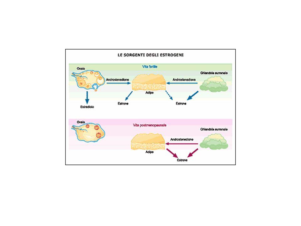 Il range di età per linsorgenza della menopausa varia dai 48 ai 55 anni POF, premature ovarian failure 1% delle donne entra in menopausa prima dei 40 anni EARLY MENOPAUSE, menopausa precoce 10% delle donne entra in menopausa prima dei 45 anni MIRF, menopausa indotta radiologica e farmacologica MENOPAUSA CHIRURGICA Nella maggioranza degli studi non influiscono in alcun modo sulletà della menopausa: RAZZA PARITA USO DI CO EPIDEMIOLOGIA