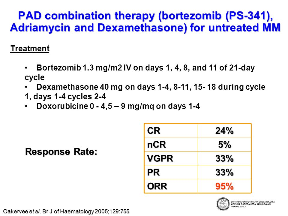 VTD (VELCADE ®, Thalidomide, Dexamethasone) as Primary Therapy for Newly-Diagnosed MM Treatment: Bortezomib 1.0 to 1.9 mg/m 2 days 1, 4, 8, 11 q 28 days Bortezomib 1.0 to 1.9 mg/m 2 days 1, 4, 8, 11 q 28 days Thalidomide 100-200 mg each evening Thalidomide 100-200 mg each evening Dexamethasone 20 mg/m 2 days 1-4, 9-12, 17-20 q 28 days Dexamethasone 20 mg/m 2 days 1-4, 9-12, 17-20 q 28 days 28- day treatment cycle, 2 cycles Institutional experience of 36 patients –92% Response rate (CR+PR) –PBSC easily collected Wang et al.