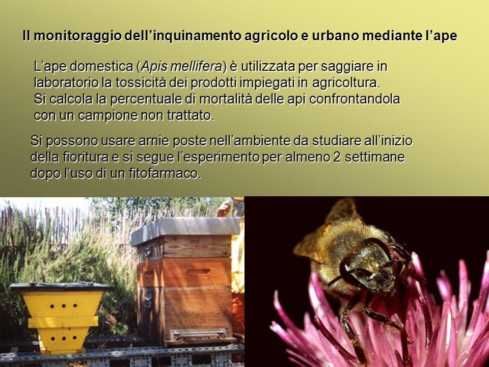 Università Federico II di Napoli Introduzione bioindicatori animali Il monitoraggio dellinquinamento agricolo e urbano mediante lape Lanalisi oltre che sul numero di api morte si può eseguire anche sul polline, miele, cera, nettare e larve.