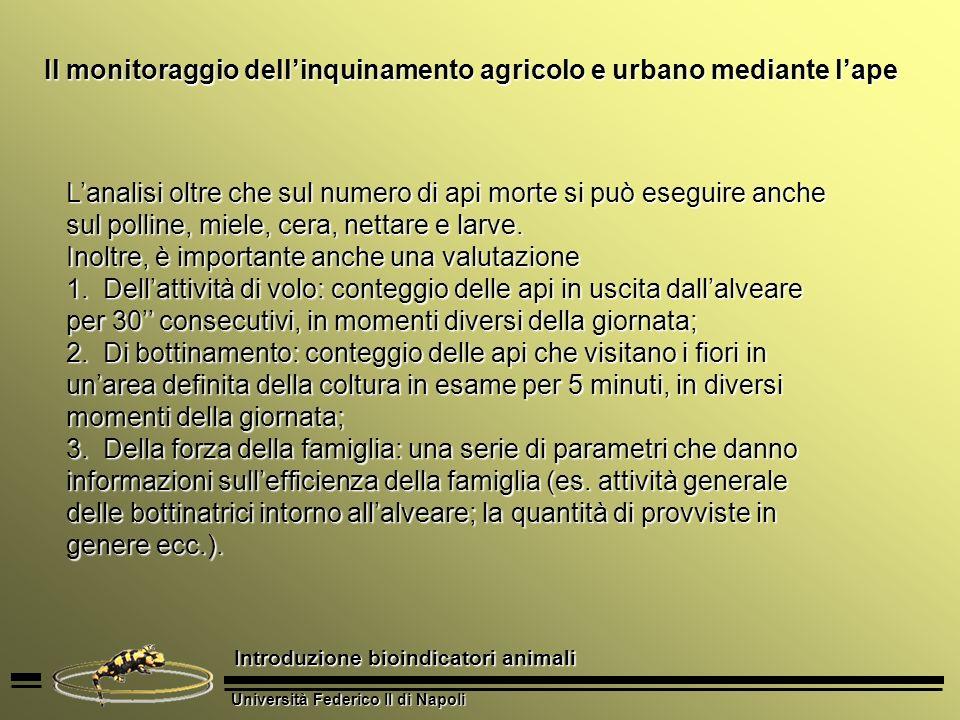 Università Federico II di Napoli Introduzione bioindicatori animali Pesci Nei fiumi la presenza di determinate specie può dare utili informazioni riguardo lo stato di salute del corpo dacqua.