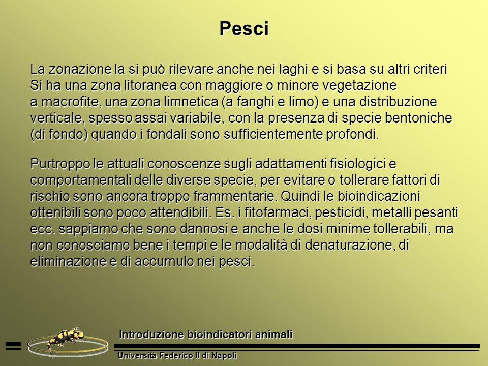 Università Federico II di Napoli Introduzione bioindicatori animali Anfibi Per luso degli anfibi vanno individuate pozze o favoriti accumuli dacqua nel luogo dindagine.