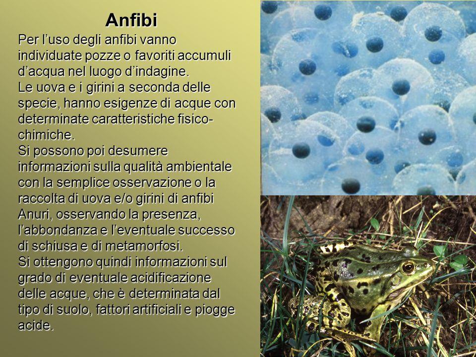 Università Federico II di Napoli Introduzione bioindicatori animali Rettili Alcune specie di rettili si prestano come bioindicatori.
