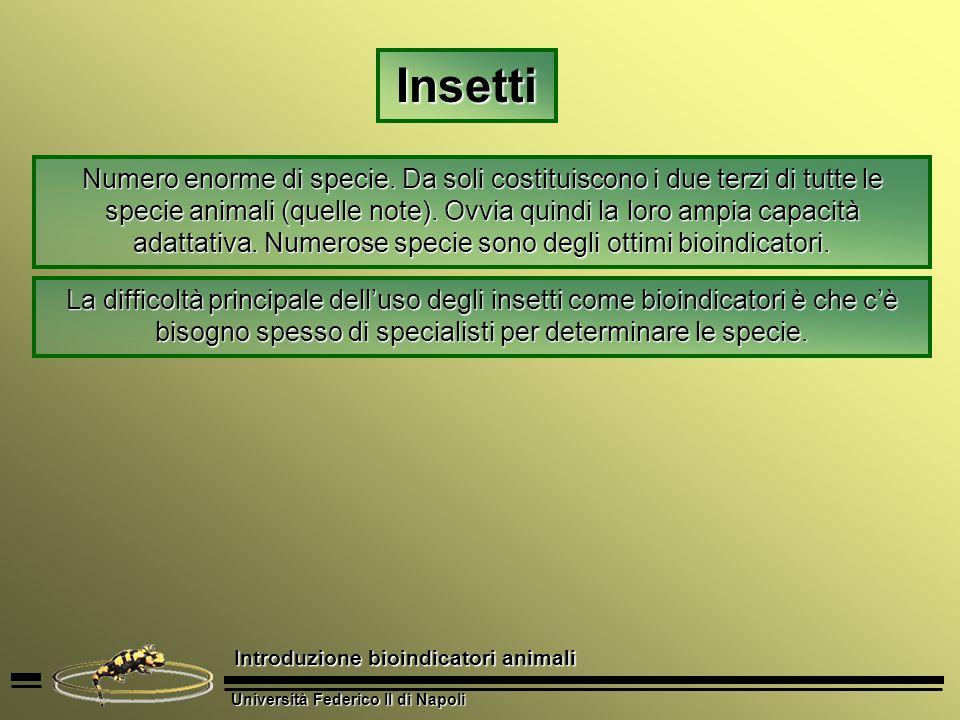 Università Federico II di Napoli Introduzione bioindicatori animali Luso degli Scolitidi come indicatori dello stato di salute della vegetazione Negli ecosistemi forestali, gli Scolitidi sono tra i Coleotteri più dannosi per gli alberi.