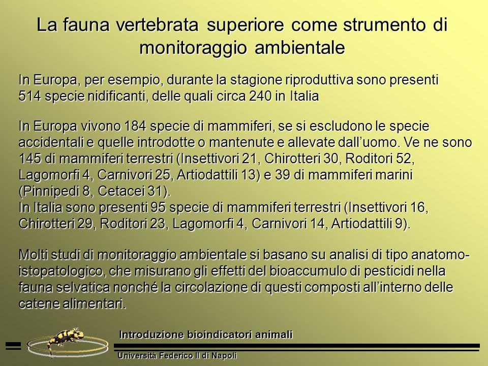 Università Federico II di Napoli Introduzione bioindicatori animali La fauna vertebrata superiore come strumento di monitoraggio ambientale La presenza di specie bersaglio può infatti indicare lesistenza di una particolare condizione ecologica.