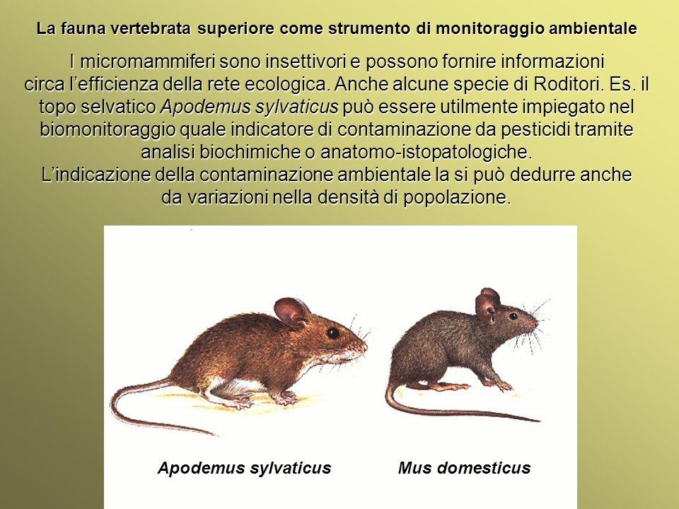 Università Federico II di Napoli Introduzione bioindicatori animali La fauna vertebrata superiore come strumento di monitoraggio ambientale Apodemus sylvaticus