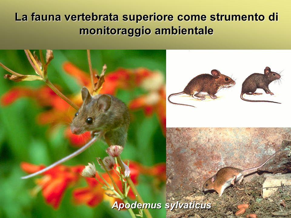 Università Federico II di Napoli Introduzione bioindicatori animali La fauna vertebrata superiore come strumento di monitoraggio ambientale La presenza dei carnivori è fortemente influenzata dalle attività umane.