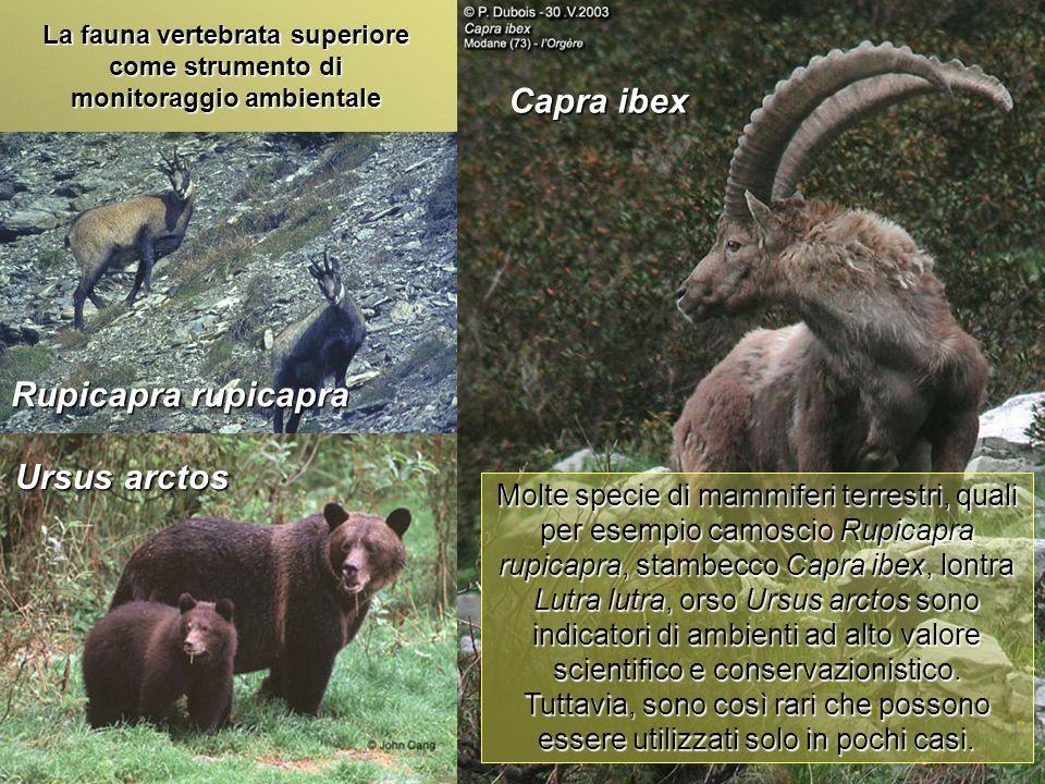 Università Federico II di Napoli Introduzione bioindicatori animali La fauna vertebrata superiore come strumento di monitoraggio ambientale Lo stesso discorso vale per gli ambienti marini per la maggior parte delle specie di Cetacei e Pinnipedi.