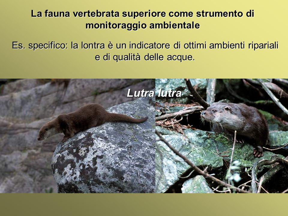 Università Federico II di Napoli Introduzione bioindicatori animali La fauna vertebrata superiore come strumento di monitoraggio ambientale Alcune specie non sono utili come indicatori perché sono introdotte a scopo venatorio.