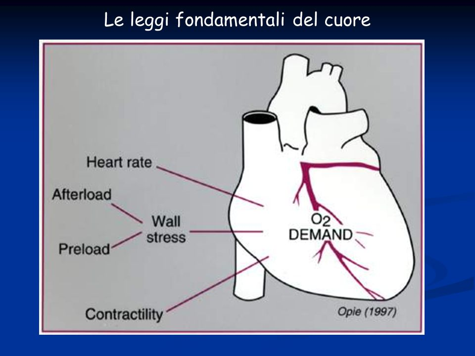 PARAMETRI CHE ESPRIMONO LA FUNZIONE CARDIACA (VS) Gittata Sistolica (GS) = VTDVS-VTSVSml Portata Cardiaca (PC) = GS x FCLitri/min Frazione di Eiezione VS = GS/VTDVS% Resistenze Vasc.