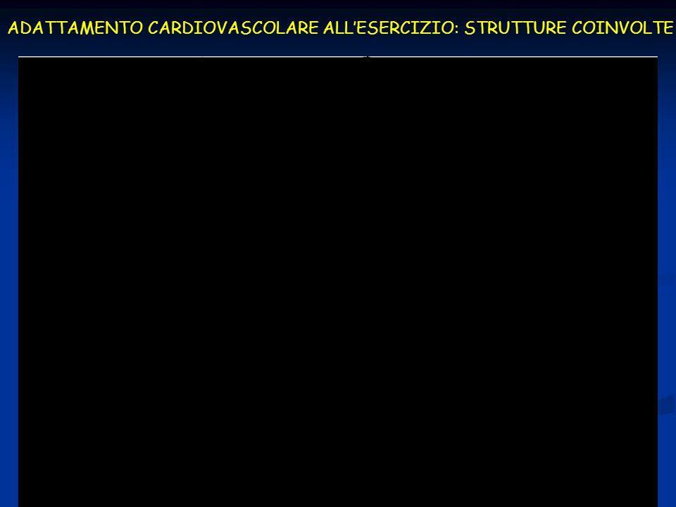 FATTORI DETERMINANTI LA RISPOSTA CARDIOVASCOLARE ALLESERCIZIO Tipo di contrazione muscolare (statica o dinamica) Tipo di contrazione muscolare (statica o dinamica) Posizione del corpo Posizione del corpo Entità della massa muscolare coinvolta Entità della massa muscolare coinvolta Intensità della contrazione Intensità della contrazione Livello e tipo di allenamento Livello e tipo di allenamento Età e sesso Età e sesso Farmaci Farmaci Patologie Patologie