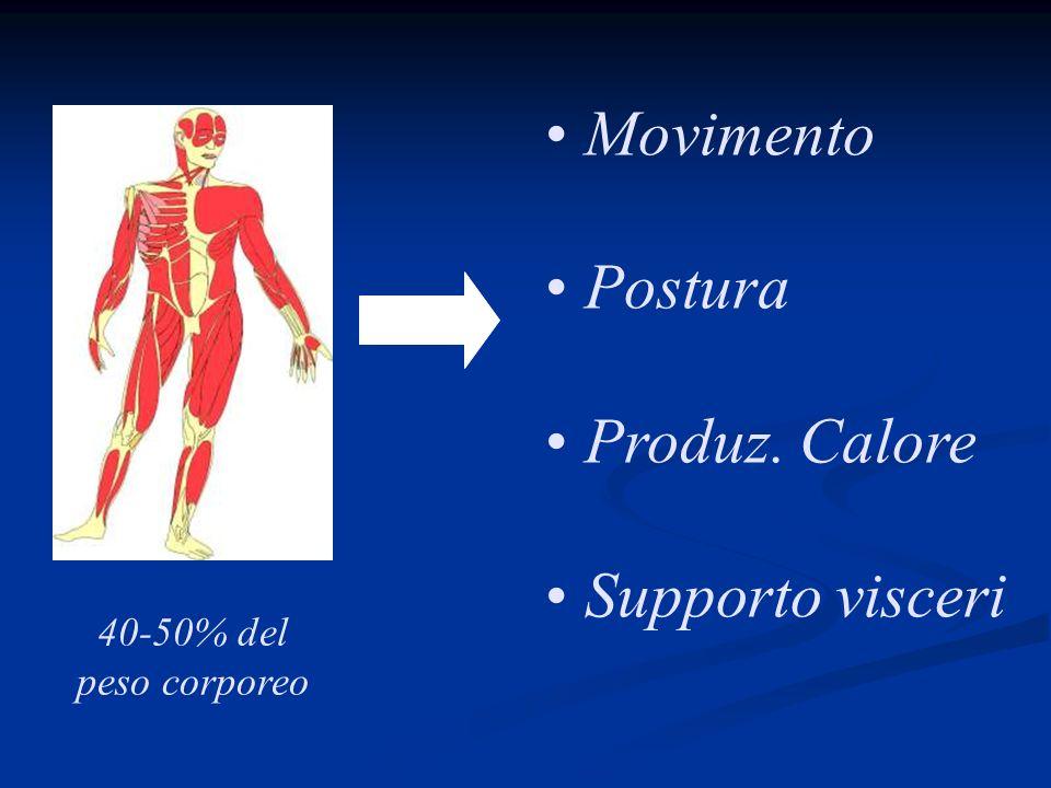 Rendimento muscolare Lavoro Energia totale spesa = Cellula muscolare = 25% Muscolo in movimento = 50-60% 1 kcal/kg/km