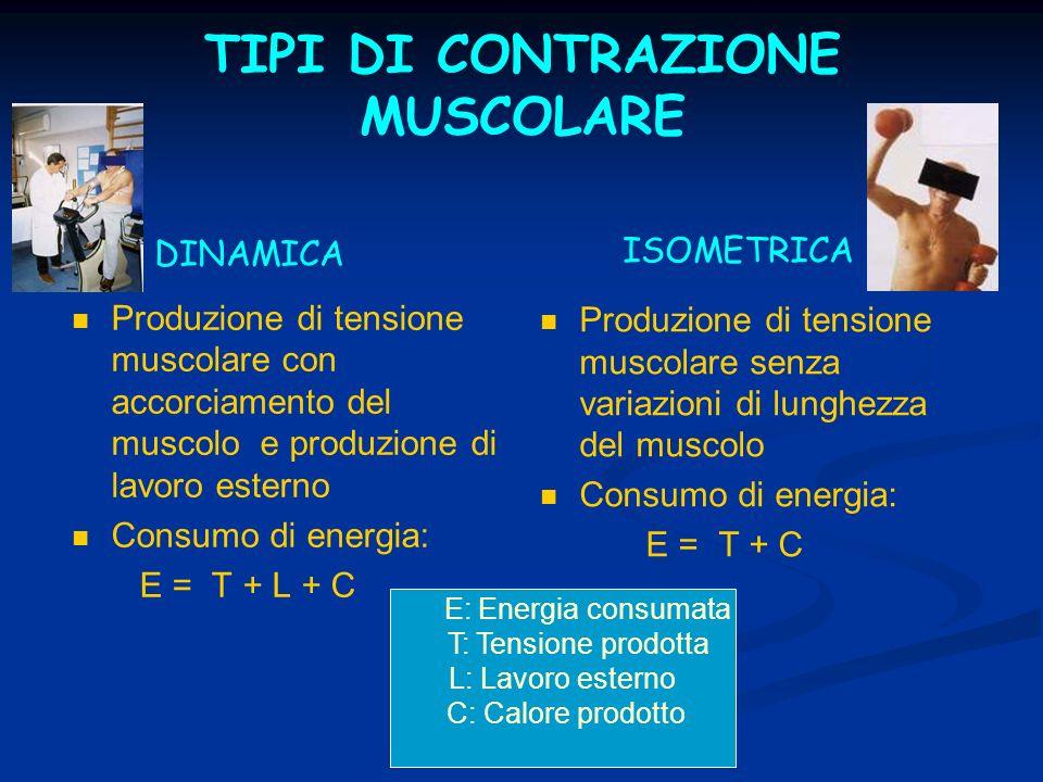 RISPOSTA CARDIOVASCOLARE ALLESERCIZIO DINAMICO E ISOMETRICO Riposo Esercizio dinamico Esercizio isometrico FC (b/min) 70180125 GS (ml) 80140 88 88 PC (L/min) 5.6 5.6 25 25 11 11 PAS (mm/Hg) 120180210 PAD (mm/Hg) 80 80 140 RVP (mmHg/L/min) 16.6 4.5 4.5 16 16 Delta a-v 02 (ml/dL) 5 16 16 7 V02 (L/min) 0.28 4.0 4.0 2.8 2.8