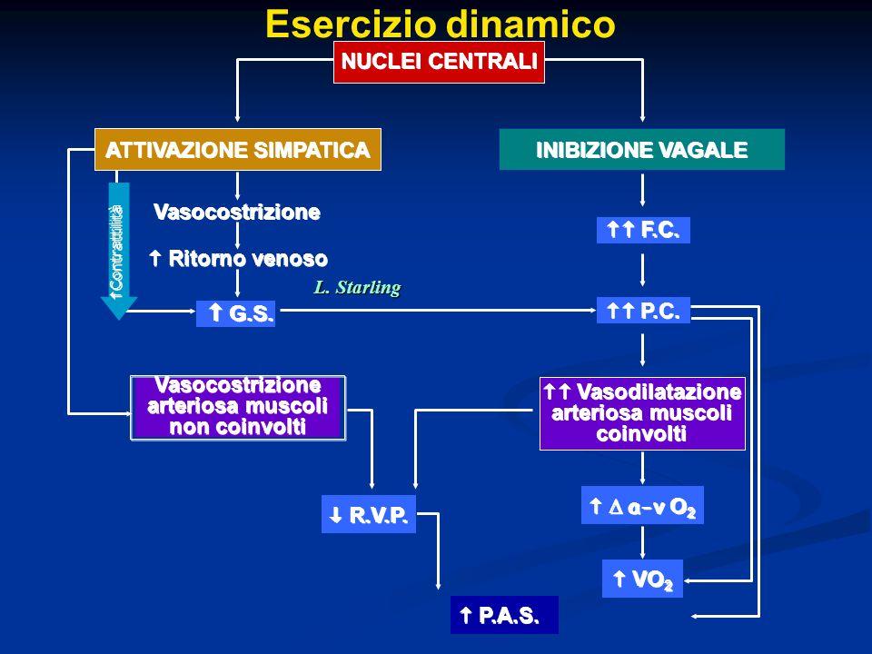 DIFFERENZE TRA ESERCIZIO DINAMICO IN ORTOSTATISMO E IN CLINOSTATISMO Equilibrato utilizzo dellincremento del volume telediastolico ventricolare e della frequenza cardiaca Equilibrato utilizzo dellincremento del volume telediastolico ventricolare e della frequenza cardiaca Minore aumento del volume telediastolico ventricolare rispetto al basale già aumentato per il ritorno venoso Maggiore utilizzo dellincremento della frequenza cardiaca ORTOSTATISMO CLINOSTATISMO