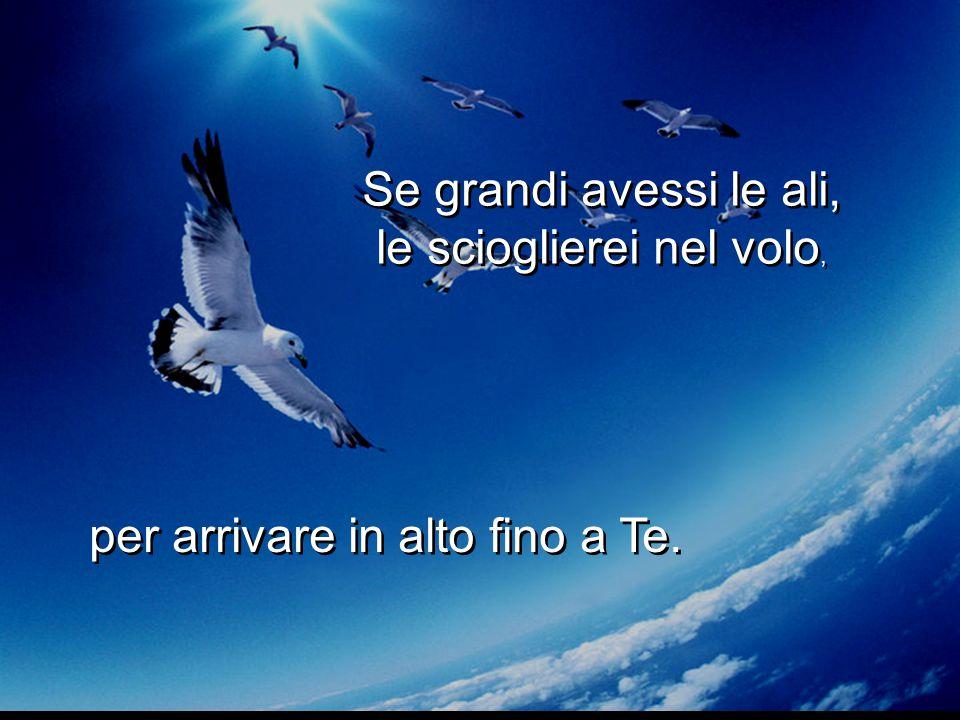 Se grandi avessi le ali, le scioglierei nel volo, Se grandi avessi le ali, le scioglierei nel volo, per arrivare in alto fino a Te.