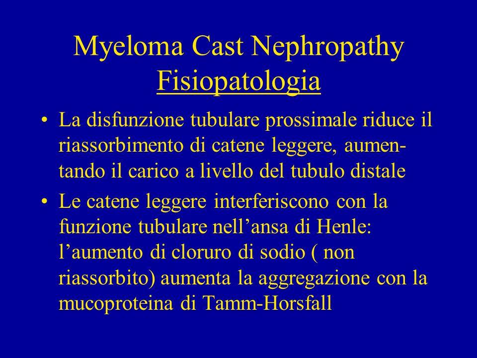 Myeloma Cast Nephropathy Fisiopatologia I diuretici dellansa (furosemide) possono aumentare la formazione di cilindri.