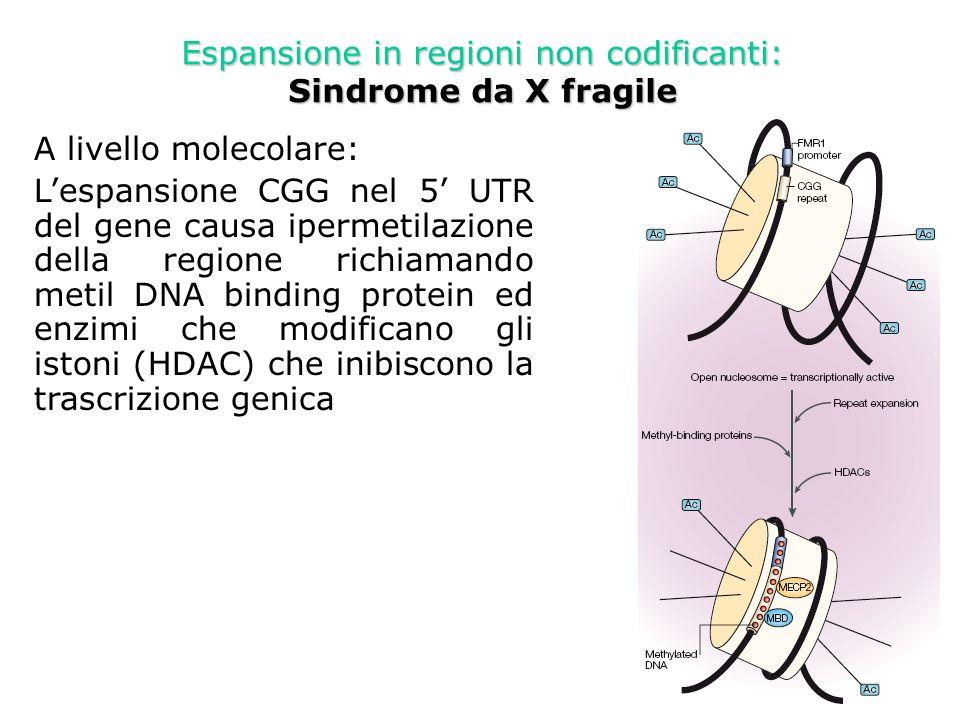 Espansione in regioni non codificanti: Sindrome da X fragile- approcci terapeutici Agenti demetilanti (5-azadeoxycytidina o 5-aza)Agenti demetilanti (5-azadeoxycytidina o 5-aza) Inibitori di HDACInibitori di HDAC Uso sinergistico dei 2 composti