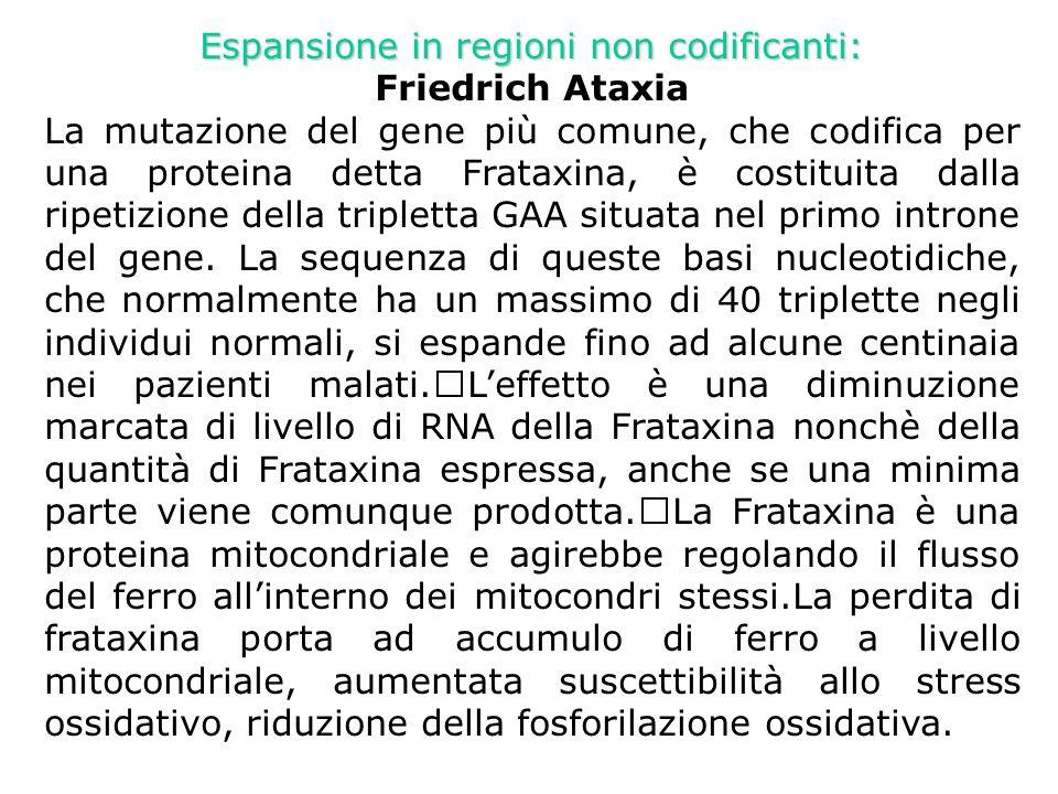 Espansione in regioni non codificanti: Friedrich Ataxia-approcci terapeutici - -antiossidanti (Idebone.