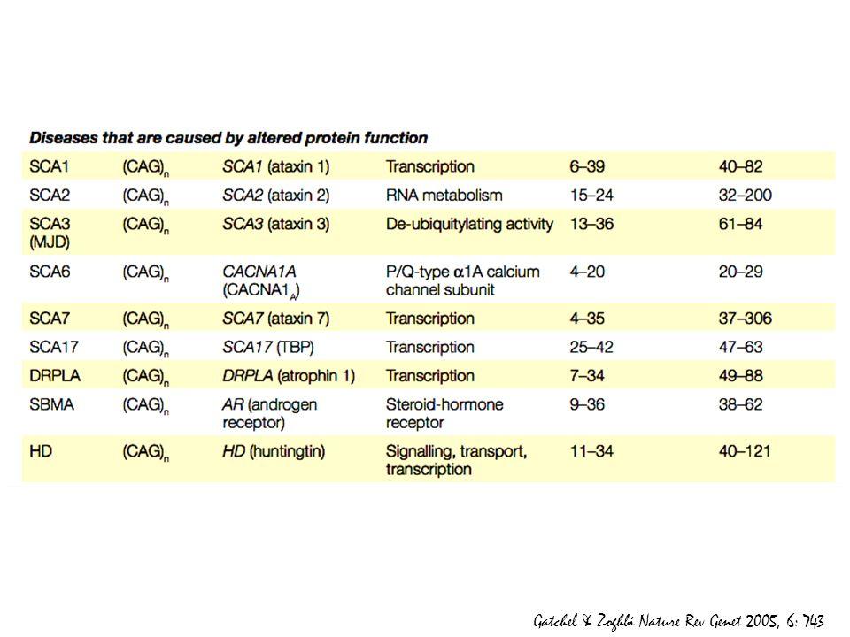 Sono proteine espresse in modo ubiquitario, ma presentano disfunzioni solo a livello neurologico.