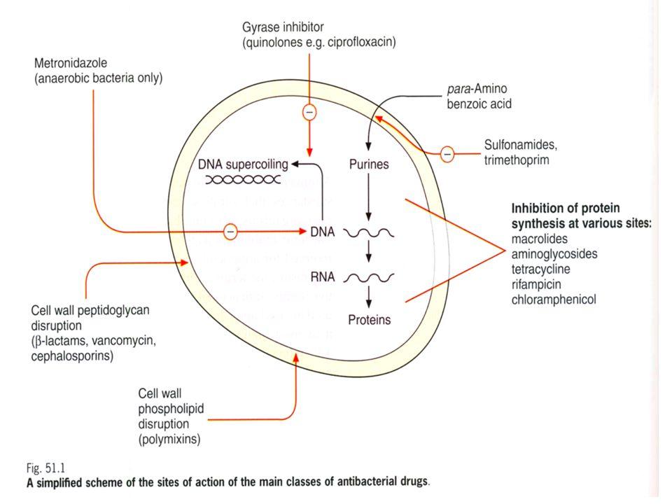 Con il termine di resistenza batterica si indica linsensibilità di un ceppo batterico ad un determinato antibiotico.