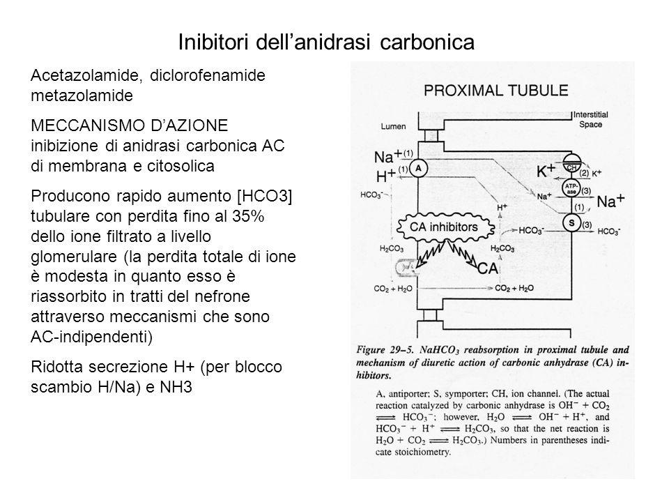 Inibitori dellanidrasi carbonica Alcalinizzazione urine (pH8) e acidosi metabolica Modesti effetti diuretici con perdita di HCO3, Na, K, PO4 EFFETTI EMODINAMICI RENALI Laumento della concentrazione tubulare di soluti a livello della macula densa provoca riduzione del flusso renale e della velocità di filtrazione glomerulare (GFR) EFFETTI SU ALTRI ORGANI SNC: acidsosi, riduzione formazione liquor, parestesie Uso: Glaucoma Epilessia Tossicità: da acidosi: confusione, parestesie; attenzione in pazienti con acidosi (metabolica o respiratoria) presente Aggrava encefalopatia epatica per aumento NH3 ematica