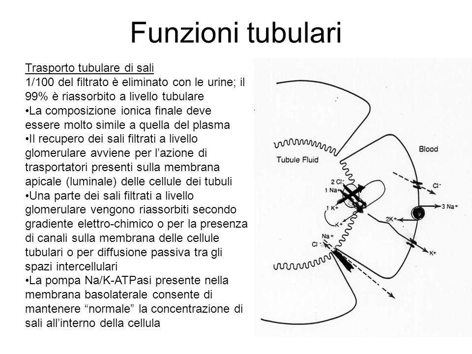 Funzioni tubulari I sali espulsi dalla cellula tubulare (prevalentemente NaCl) vengono riassorbiti dal sangue che scorre nei capillari renali Il recupero dei sali lungo il nefrone non è omogeneo perché la distribuzione dei sistemi di trasporto non è omogenea