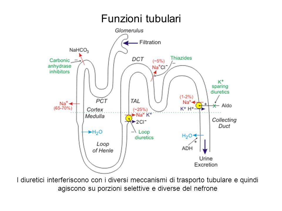 Farmacologia del tubulo prossimale Strettamente iso-osmotico; qui avviene il recupero del 75% dellacqua filtrata Trasporti presenti: In membrana apicale: Scambiatore Na/H Trasporto acidi e basi deboli (secrezione) In membrana basolaterale: anche Na/HCO3 A causa della iso-osmoticità, aumenta la [Cl] che fluisce nelle parti finali del tubulo per via intercellulare trascinandosi il Na: mannitolo previene la concentrazione del Cl e quindi diventa natriuretico Diuretici attivi sul tubulo prossimale: Osmotici Inibitori anidrasi carbonica