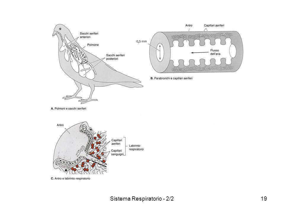 Sistema Respiratorio - 2/220