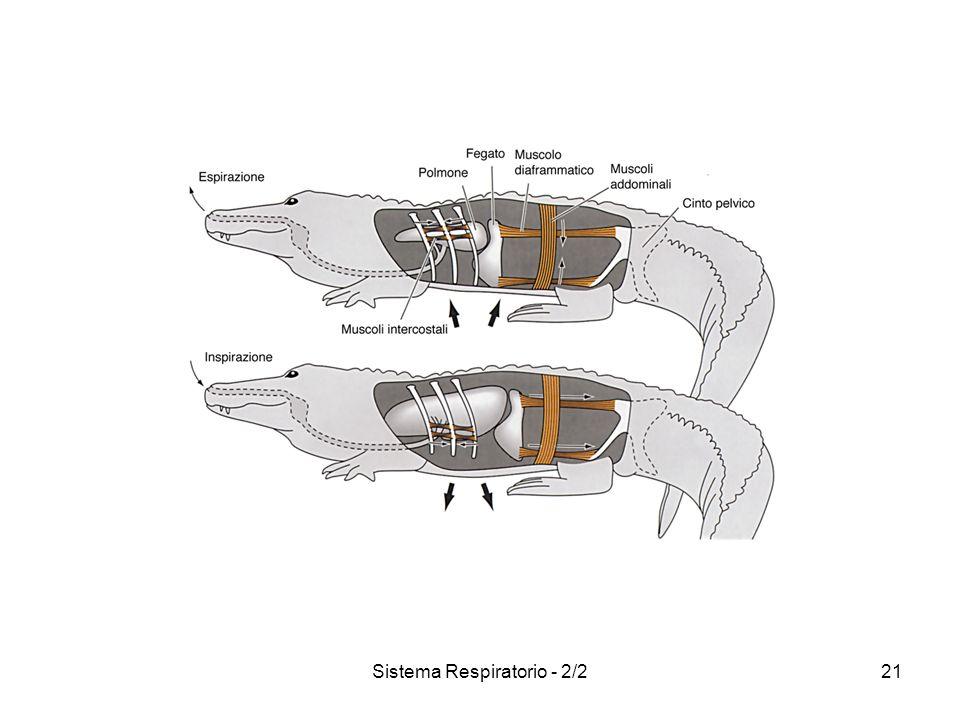 Sistema Respiratorio - 2/222