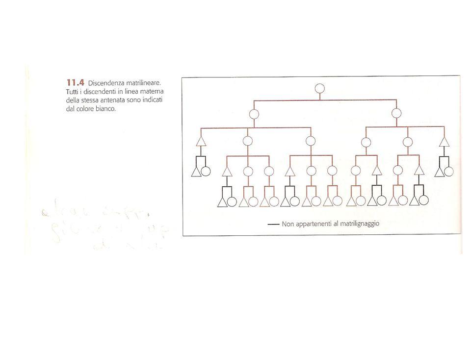 7 CRITERI DI DISTINZIONE (dal più frequente al meno frequente) 1)Generazione 2)Sesso 3)Affinità 4)Collateralità 5)Biforcazione 6)Età relativa 7)Sesso parente che fa da tramite