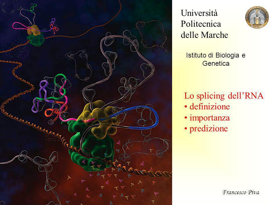 Struttura tipica dei geni umani esoniintroni