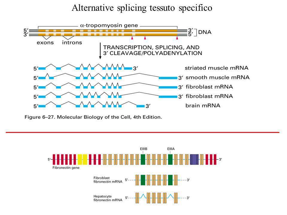 Alcuni modi di fare splicing alternativo