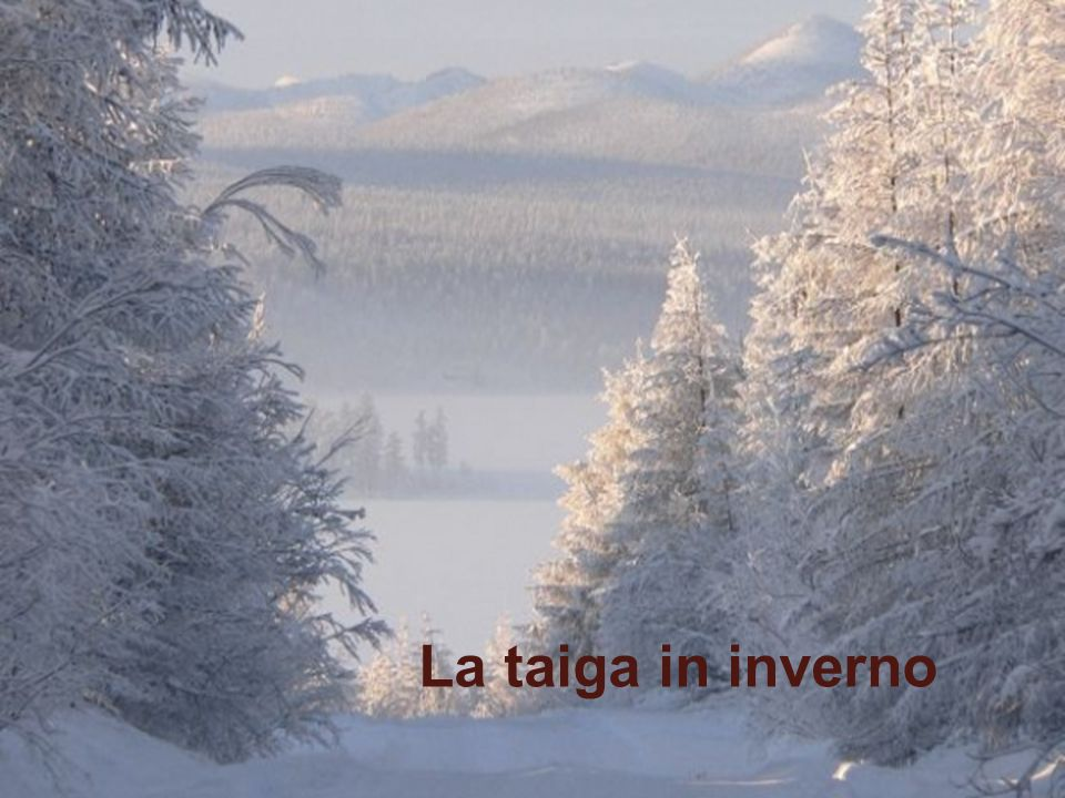 www.didadada.it I fiumi attraversati dalla Transiberiana sono ben 16: Volga, Oka, Amur, Khor, Irtysh, Ob , Tom ,Enisei, Selenga, Chulim, Kama, Vyatka, Tobol, Ussury, Bureya, Zeya.