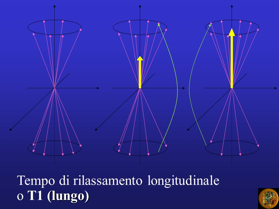 Dopo RF i protoni vanno fuori faseDopo RF i protoni vanno fuori fase Disomogeneità di campo: ogni protone è influenzato dai piccoli campi magnetici dei nuclei viciniDisomogeneità di campo: ogni protone è influenzato dai piccoli campi magnetici dei nuclei vicini Rilassamento spin-spinRilassamento spin-spin T2: tempo di decremento magnetizzazione trasversaleT2: tempo di decremento magnetizzazione trasversale RILASSAMENTO TRASVERSALE