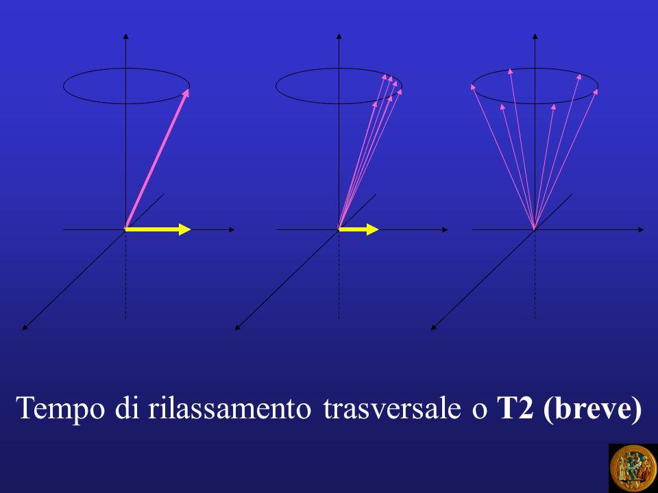 DP: densità protonica Rappresenta il numero di protoni, cioè dei nuclei di H risonanti per unità di volume di tessutoRappresenta il numero di protoni, cioè dei nuclei di H risonanti per unità di volume di tessuto Allaumentare di tale numero aumenta anche lintensità del segnale RMAllaumentare di tale numero aumenta anche lintensità del segnale RM