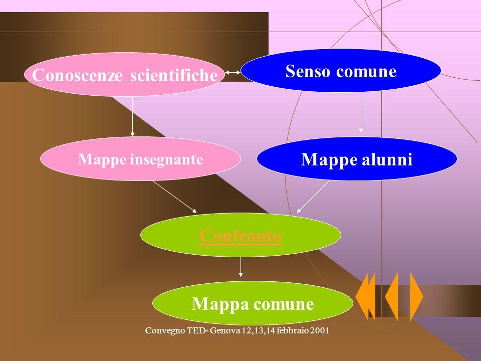 Convegno TED- Genova 12,13,14 febbraio 2001 Conoscenze scientifiche Senso comune Mappe insegnante Mappe alunni Confronto Mappa comune