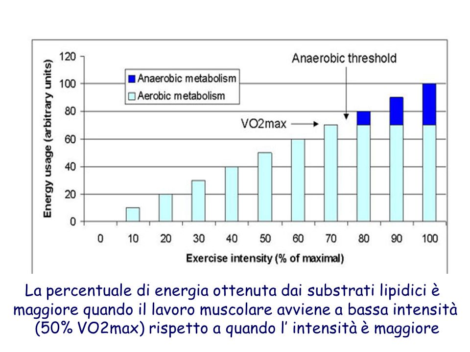 L entità dell utilizzo dei lipidi rispetto ai carboidrati dipende dall intensità e dalla durata dell esercizio fisico