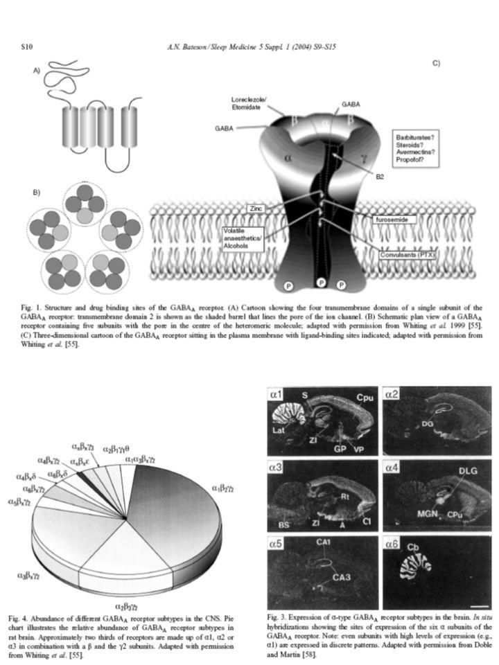 MECCANISMO DI APERTURA DEL CANALE: GABA+R  piccola rotazione del dominio extracellulare delle subunità recettoriali x formazione di ponti disolfuro.