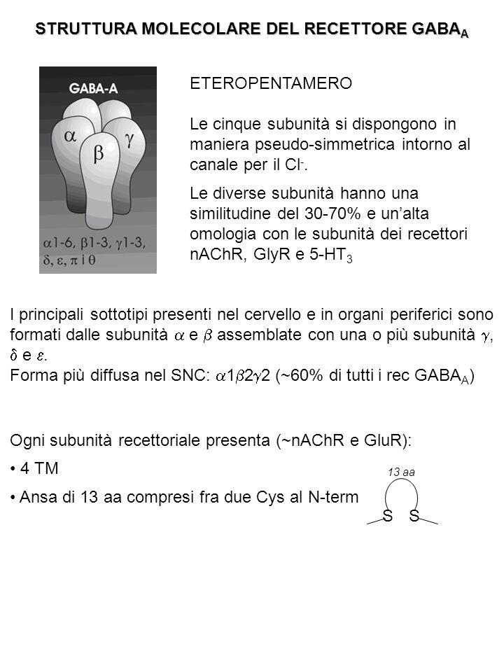 Sito di legame per il GABA: Domini extracellulari della subunità  Partecipano anche ,  e  Vi si legano anche GABA-mimetici (muscimolo) e antagonisti comp (bicucullina) Sito di legame per le BDZ: Definito anche recettore centrale per le BDZ Subunità  (ma è necessaria anche la presenza di  2) Vi si legano anche: le  -carboline (AG-inversi  ↓ interazione del GABA con il proprio sito di legame) il FLUMAZENIL (AT competitivo  privo di attività intrinseca, blocca l'azione sia di AG che di AG inversi che interagiscono con il sito di legame delle BDZ) Sito di legame per i BARBITURICI: Si trova all'interno del poro (regione TM2 della subunità  ) Vi si legano anche la picrotossina (AT diretto) e il TBPS (t-butil biciclo fosforotionato: AT allosterico) AZIONI dei BARBITURICI: - A basse conc: modulatori allosterici  ↑ influsso di Cl - in presenza di GABA - A conc + alte: agiscono direttamente sul canale aprendolo (indipendentemente dalla presenza di GABA) - A conc molto alte: bloccano la corrente del Cl -