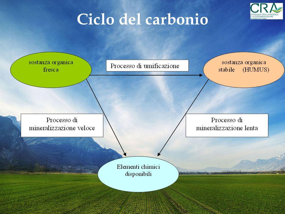 Immobilizzazione di CO 2 in seguito a sovescio di B. juncea