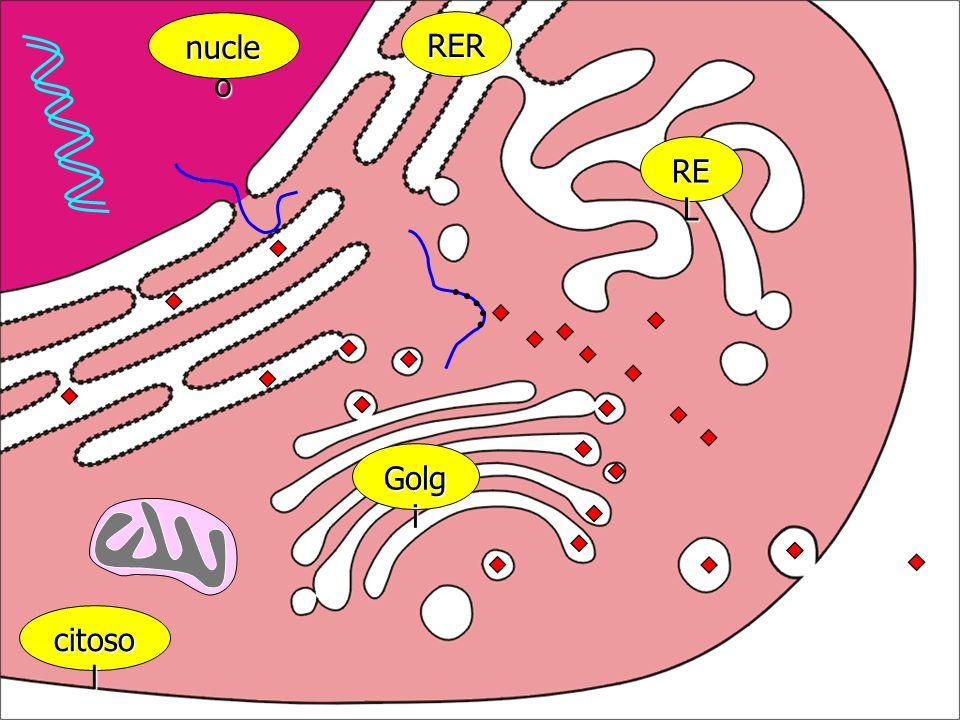 principali costituenti chimici della cellula