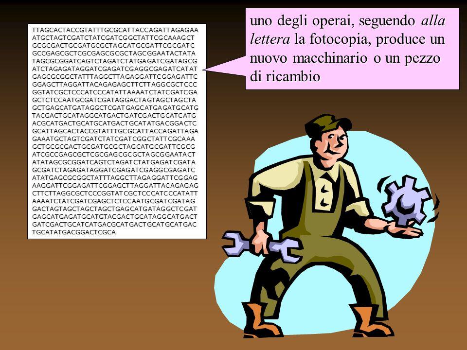 cellula nucleo cromosomi TTAGCACTACCGTATTTGCGCA TTACCAGATTAGAGAAATGCTA GTCGATCTATCGATCGGCTATT CGCAAAGCTGCGCGACTGCGA TGCGCTAGCATGCGATTCGCG ATCGCCGAGCGCTCGCGAGCG CGCTAGCGGAATACTATATAGC GCGGATCAGTCTAGATCTATGA GATCGATAGCGATCTAGAGATA GGATCGAGATCGAGGCGAGAT CATATGAGCGCGGCTATTTAGG CTTAGAGGATTCGGAGATTCG GAGCTTAGGATTACAGAGAGC TTCTTAGGCGCTCCCGGTATCG CTCCCATCCCATATTAAAATCT ATCGA acidi nucleici (DNA-RNA) ribosomi proteine