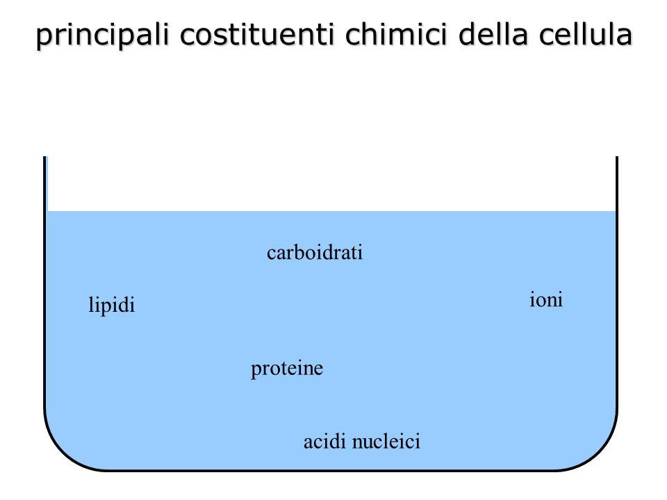 proteine le proteine sono costituite da catene di aminoacidi (polipeptidi)