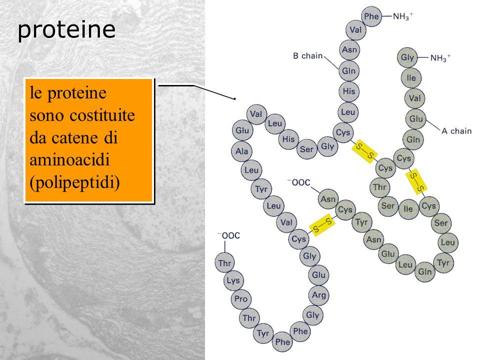 aminoacidi questi sono i 20 aminoacidi che si trovano nellorga- nismo umano e che costituiscono le proteine