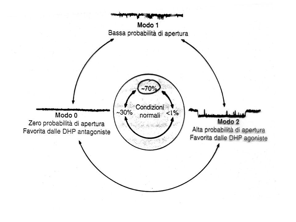 Ca 2+ -ANTAGONISTI: MECCANISMO DAZIONE Ridotto ingresso di Ca 2+ durante la depolarizzazione Rilasciamento muscolo liscio Ridotta contrattilità cardiaca Ridotta frequenza cardiaca Ridotta velocità di conduzione atrio-ventricolare