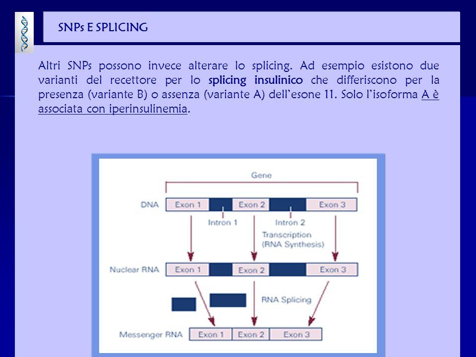 SNPs ED ATTIVITÀ ENZIMATICA Un enzima chiave nel metabolismo androgenico della prostata, lo steroide 5 -reduttasi (SRD5A2), ha 13 varianti naturali allinterno della popolazione.