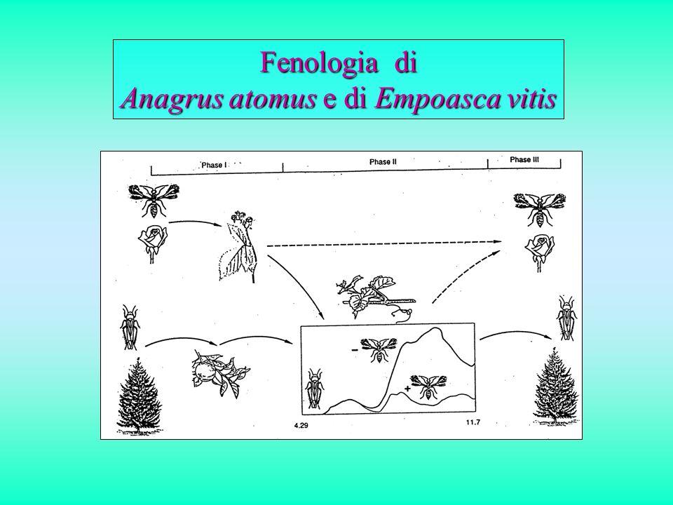 Significato ecologico della flora spontanea per gli antagonisti e le specie indifferenti