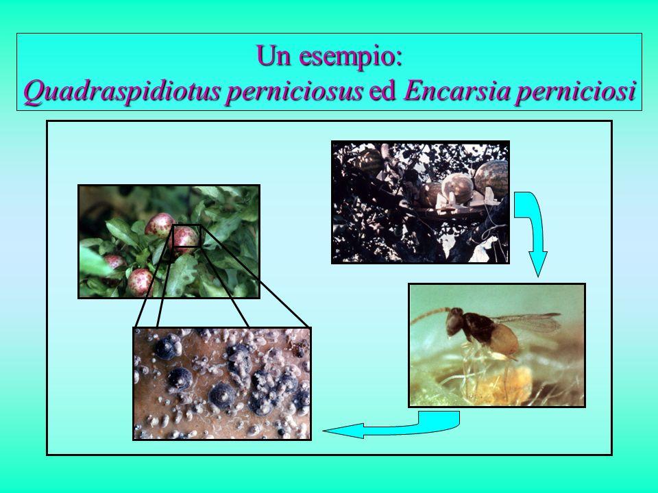 La lotta biologica classica su colture in ambiente confinato