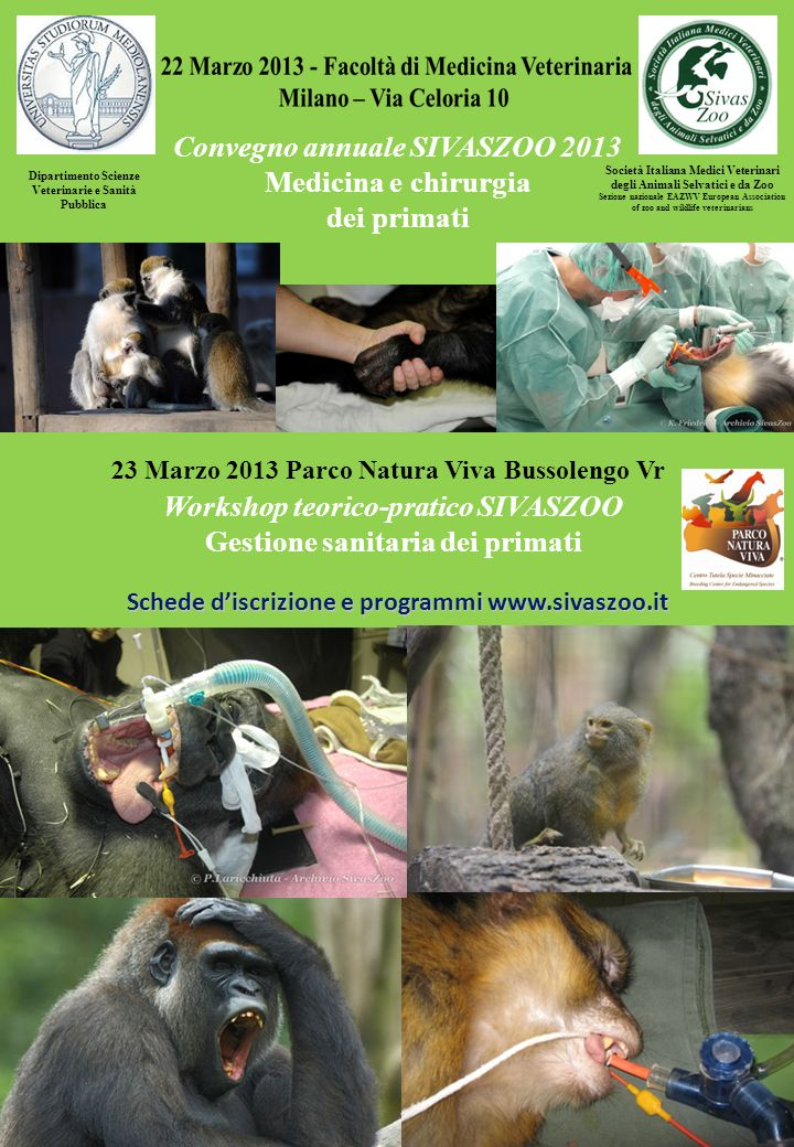 Convegno annuale SIVASZOO 2013 Medicina e chirurgia dei primati Società Italiana Medici Veterinari degli Animali Selvatici e da Zoo Sezione nazionale EAZWV European Association of zoo and wildlife veterinarians Programma scientifico: Ore 8.30 - 9.15 Registrazione dei partecipanti 9.15- 9.30 Saluti L.